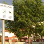 calcinaia_516_1.png