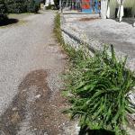 calcinaia_711_3.png