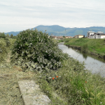 campibisenzio_2369_2.png