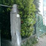 campibisenzio_503_1.png