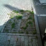 campigliamarittima_373_1.png