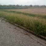cascianatermelari_1334_1.png