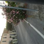 cascianatermelari_829_2.png